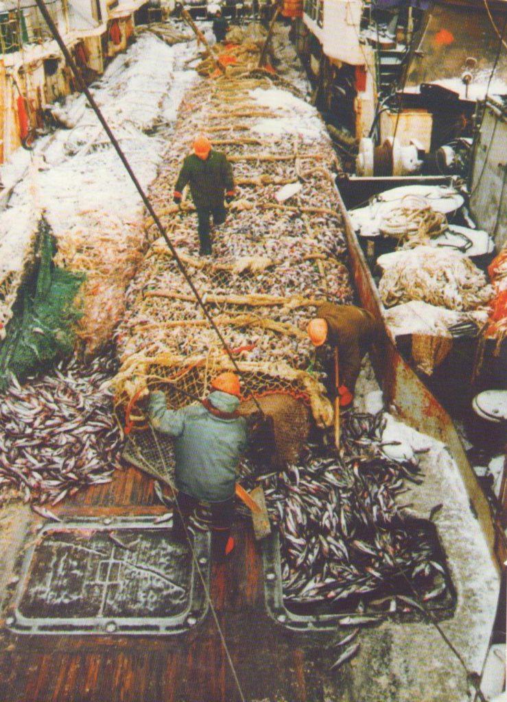 работа рыбалка вахта камчатка